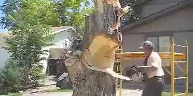 Veja o que esse homem transforma um tronco de árvore, inacreditável!