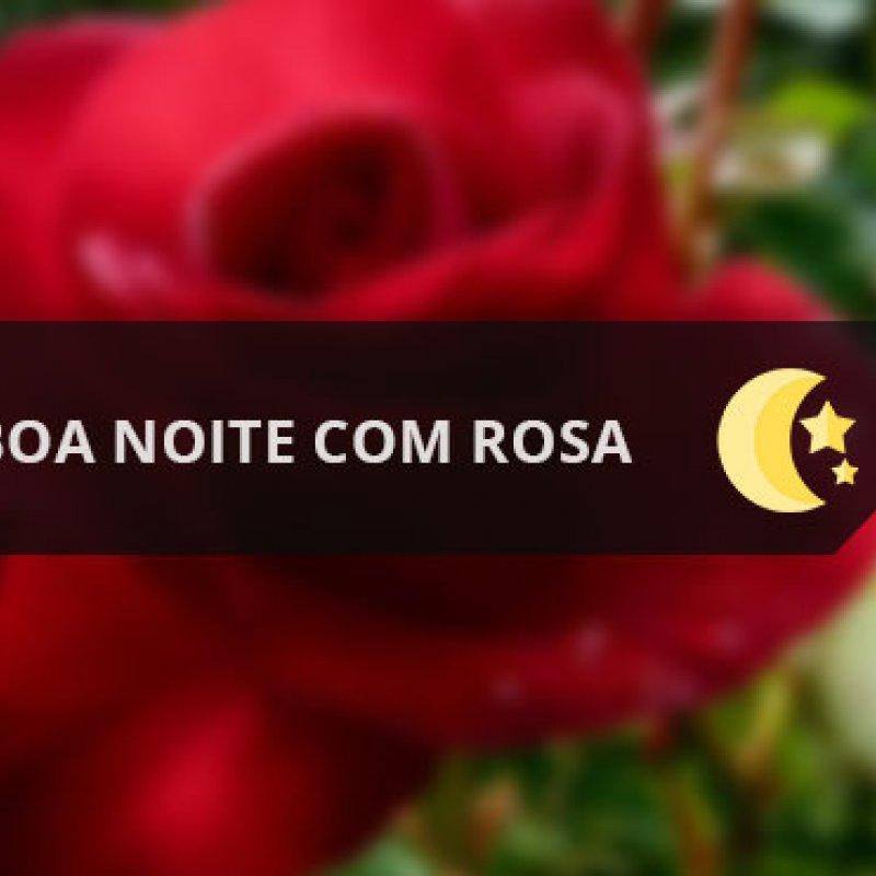 Vídeo De Boa Noite Com Rosa Vermelha Para Enviar Ao Seu Amor
